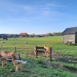 Aanzicht kippen en boerderij